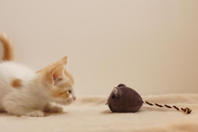 マネズミのクマちゃんは頭が良いそうなのでどうも罠は危険と学習したようです。