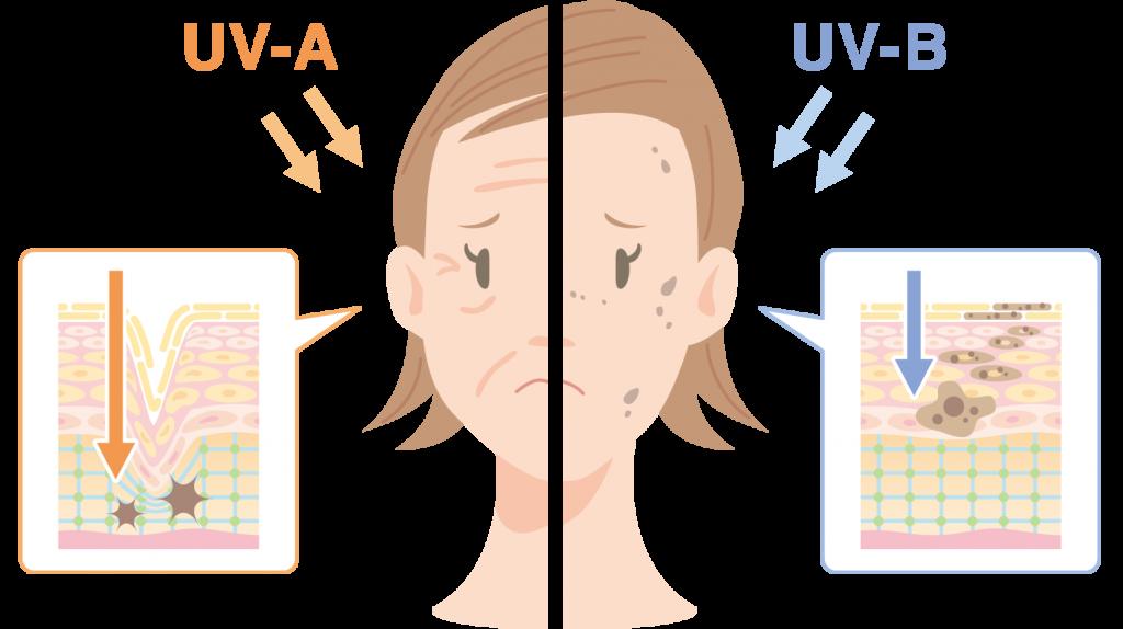 紫外線の種類 UV-A UV-B